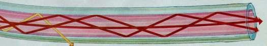 fiber 1 picture for web fiber jpg 8 26 97