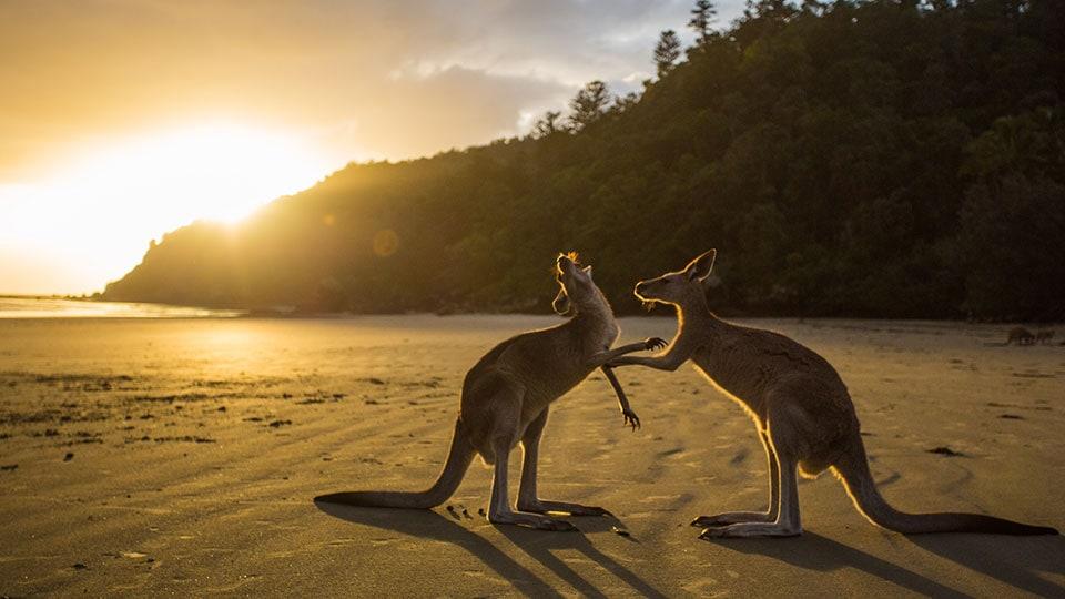 Australië - ArcGIS StoryMaps