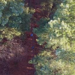 Woods running