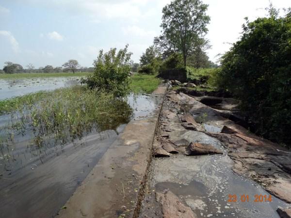 palumakichchava-inscription-anuradhapura-sri-lanka-chandima-ambanwala-archaeology-lk-4
