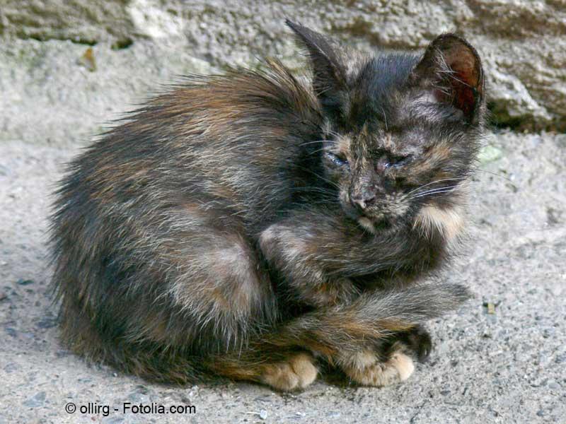 Kastration Bei Katzen Warum Ist Sie So Wichtig Arche