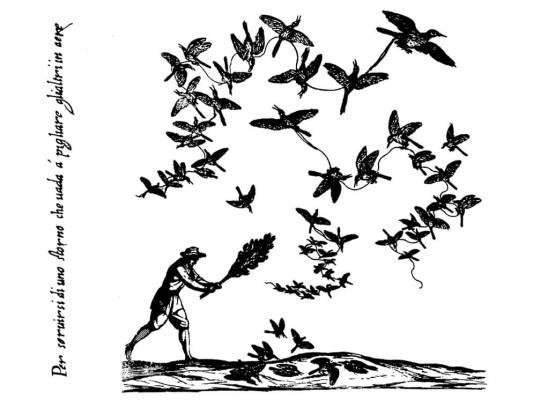 L'uccellagione allo storno
