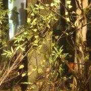 "Modell eines prähistorischen Auwaldes in der Ausstellung ""Flora Fauna Mensch""<br/>Ricostruzione di un bosco preistorico nella mostra ""Ma Ötzi, dove viveva?"" <br/> The reconstruction of a prehistoric wood in the exhibition ""Primitive? Skilled!"""