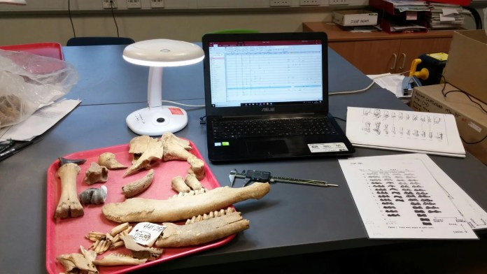 Identificazione ossa animali