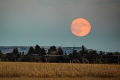 Wheatland, WY moonrise