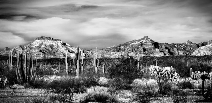 Crazy beautiful Organ Pipe National Monument