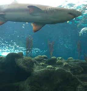 Florida Aquarium