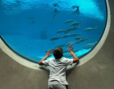 aquarium Frost Museum