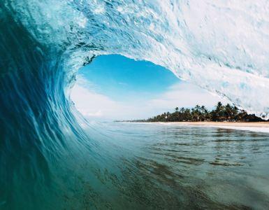 Venice Surfing Culture
