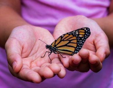Butterfly festival