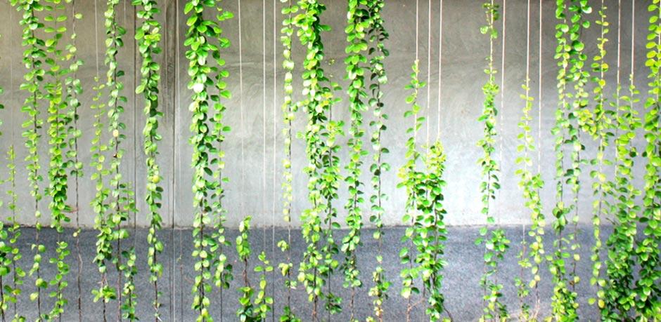 Architectkidd Co Ltd 187 Archive 187 Green Walls