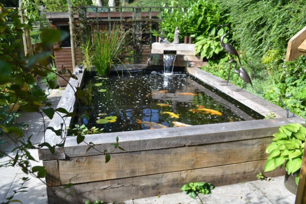 Garden Pond Fish Sale