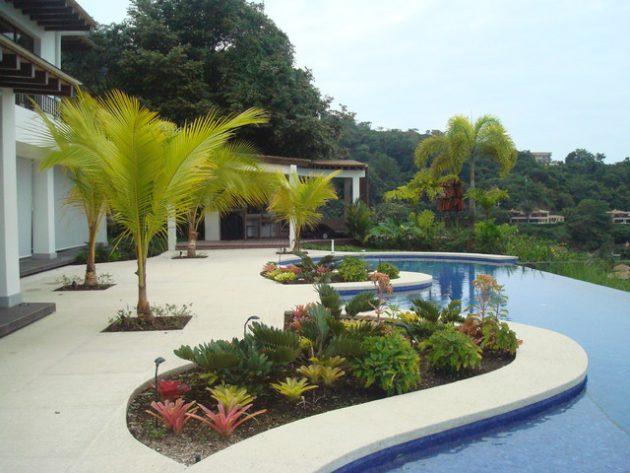 Pool Palm Tree Deck