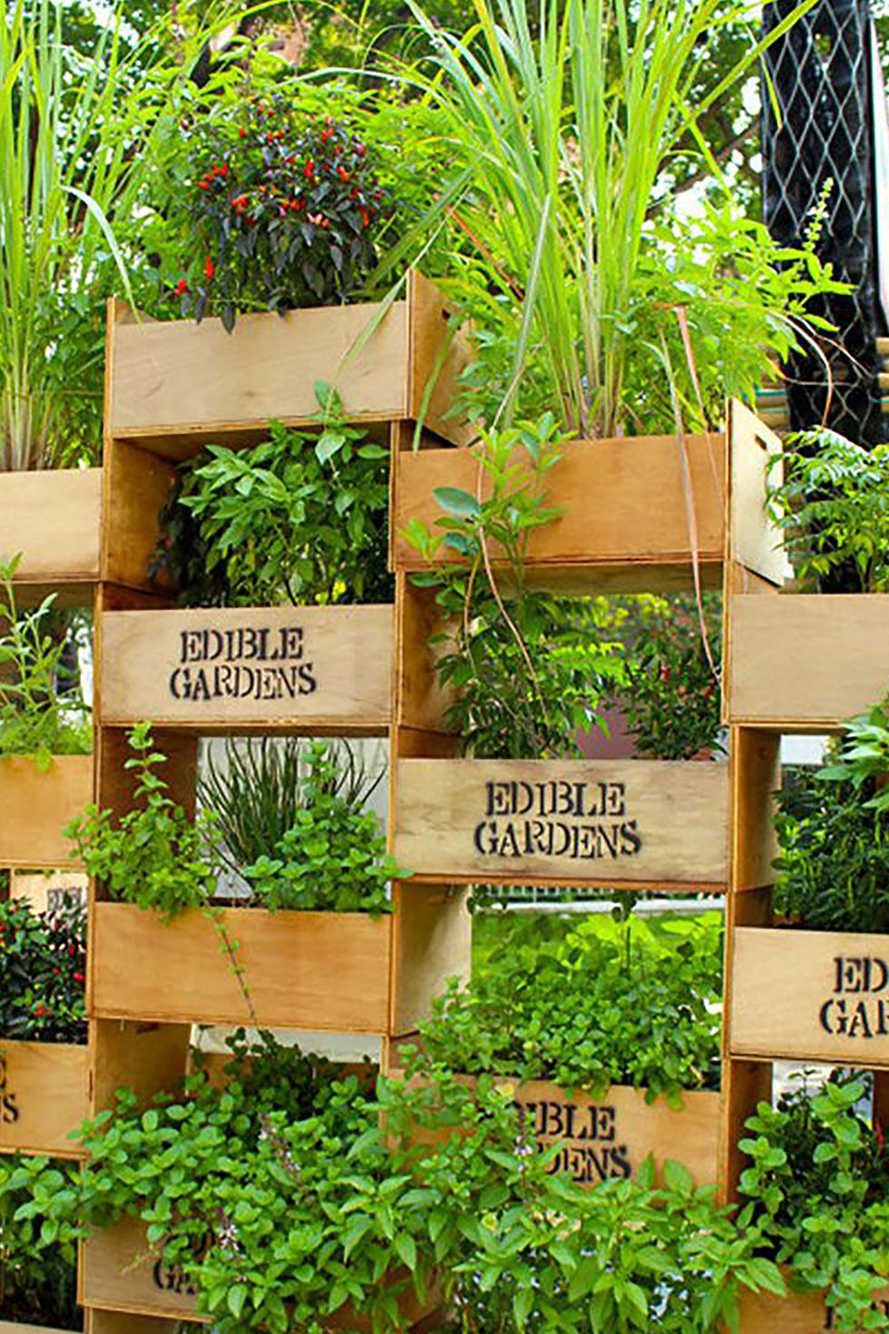 Tall Herb Planters