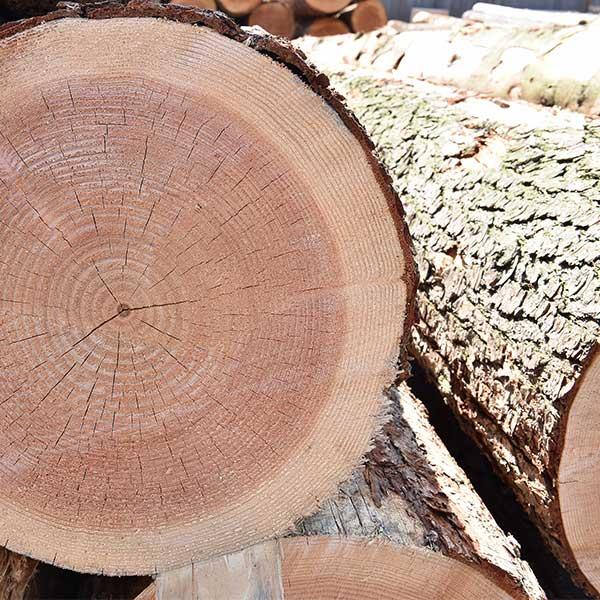 la ffn assure une production durable de bois