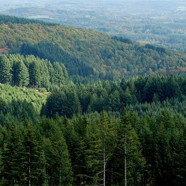 Le FFN aider les les forêts françaises et les forêts du monde