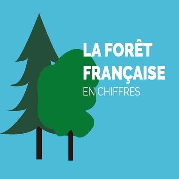 foret-bois