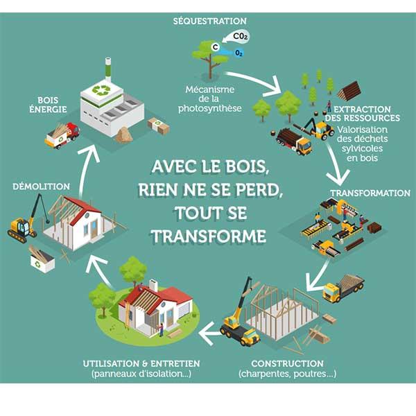 Le cycle du bois, exemple d'économie circulaire © ONF