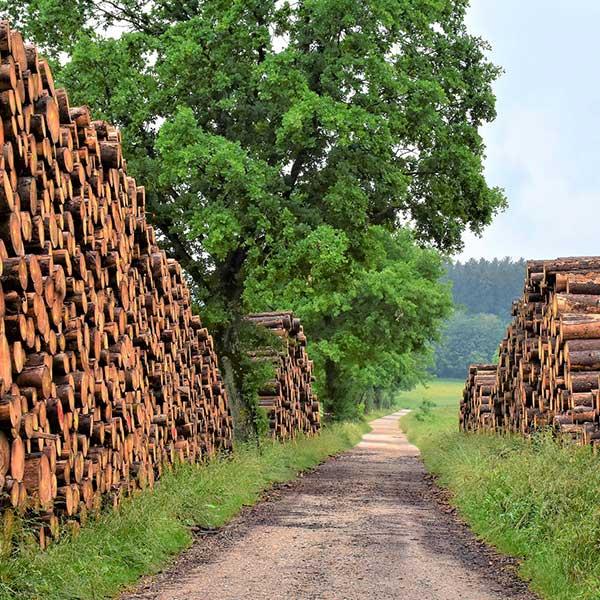 Coupe de bois en forêt © Pixabay