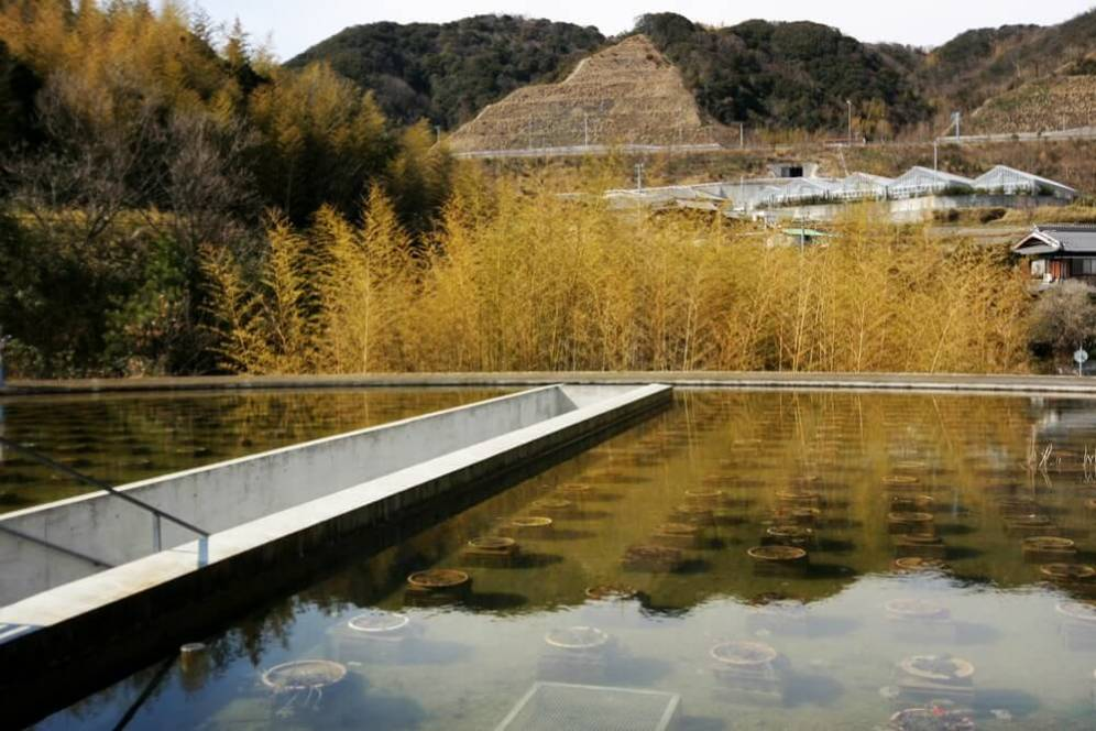 Water Temple (Shingonshu Honpukuji), Awaji, Japan, Tadao Ando Architect & Associates