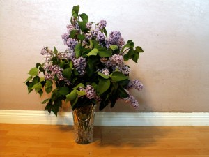 Organic Free Range Lilacs