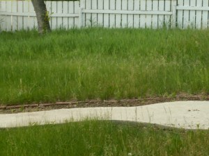 Overgrown Front Lawn