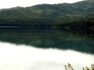 Loon on Lake