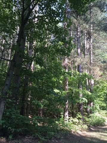 Pierce Stocking Pines