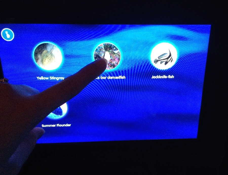 sealife aquarium touchscreen
