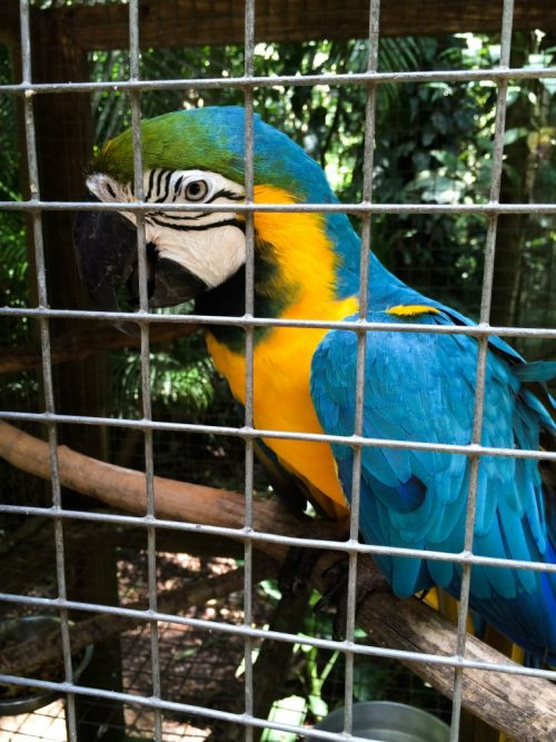 Macaw Mountain 5