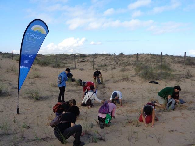 Restoration of dunes by cleaning wastes, invasive plant species and census of Chamaesyce peplis in Liencres (SAC of Liencres and Pas Estuary)