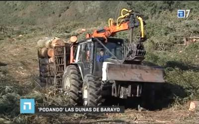 The Asturian public TV  includes a video report to show the beginning of the tree cut in Barayo (Asturias) developed by Life+ARCOS
