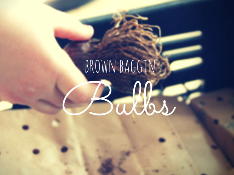 ARCTICdeco.com: Brown Bagging Bulbs