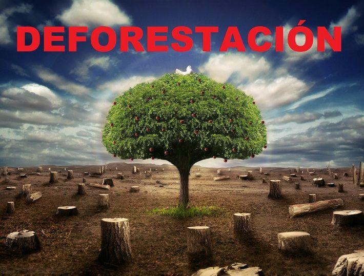 Resultado de imagen para deforestacion imagen