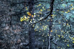 autumn_forest_in_kiev_0009