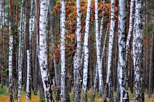 Краски осени в последний день сбора грибов в 2012 12