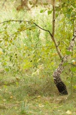 Фото природы. Пейзажи. Текстуры. Профессиональный фотограф в Киеве. 44