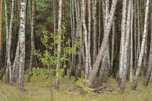Фото природы. Пейзажи. Текстуры. Профессиональный фотограф в Киеве. 45
