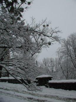 Фото природы. Пейзажи. Текстуры. Профессиональный фотограф в Киеве. 53
