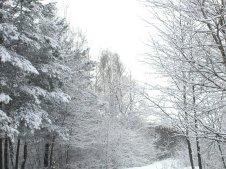 Фото природы. Пейзажи. Текстуры. Профессиональный фотограф в Киеве. 54