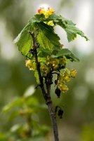Фото природы. Пейзажи. Текстуры. Профессиональный фотограф в Киеве. 68