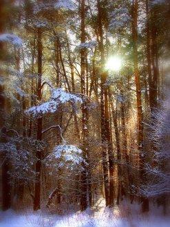 Фото природы. Пейзажи. Текстуры. Профессиональный фотограф в Киеве. 74