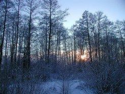 Фото природы. Пейзажи. Текстуры. Профессиональный фотограф в Киеве. 98
