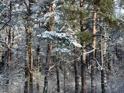 Фото природы. Пейзажи. Текстуры. Профессиональный фотограф в Киеве. 99