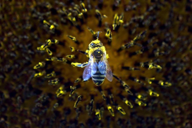 , Картинка 2015. Лучшие фотографии животных по версии bostonglobe.com, Авторская студия профессионального фотографа Сергея Рыжкова