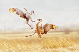 , Лучшие фото от лучших фотохудожников., Авторская студия профессионального фотографа Сергея Рыжкова