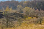 autumn landscape ukraine 0027