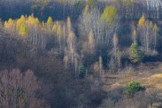 autumn landscape ukraine 0028