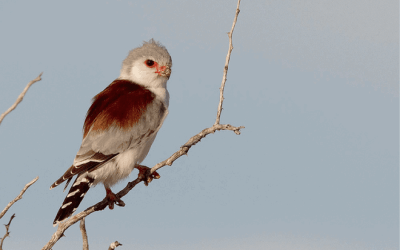 Namibia – For the Birds…