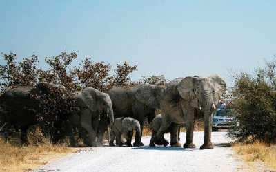 Planning your Trip to Etosha National Park